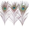 earring peacock feather|China peacock feather|peacock decorative feather